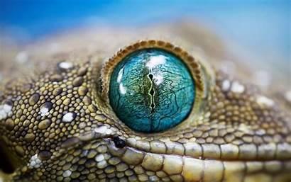 Eye Reptile Wallpapers Phone Animals