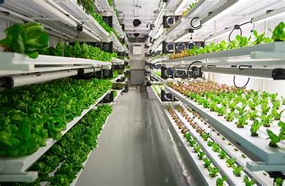 Vertical Farm Farms Tech Hydroponic Roots Locally