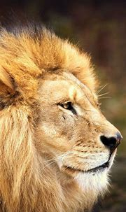 Animals Phone Wallpapers - Top Free Animals Phone ...