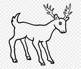 Deer Drawing Animals Coloring Easy Wild Draw Outline Pencil Sketch Cartoon Mule Ciervo Animal Clipart Dibujos Dog Dibujo Head Ciervos sketch template