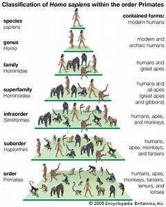 Animal Taxonomy (Animal Trees) | Fascinating Animals