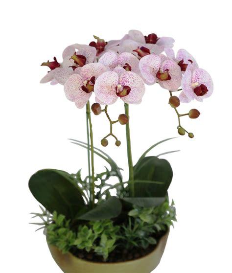 Pot Anggrek Plastik 25 gambar rangkaian bunga yang bisa dicoba sigambar baru