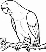 Parrot Coloring Animals Animal Bird Jungle sketch template
