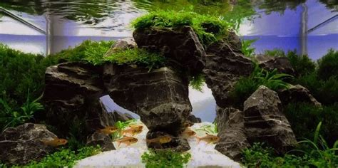 Precision Aquascapes - beautiful aquascape aquascaping aquarium fish