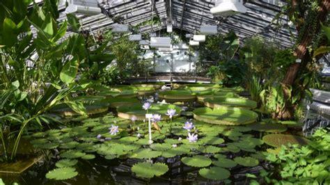 Botanischer Garten Berlin Dezember 2017 by Botanischer Garten Berlin Victoriahaus Wieder Ge 246 Ffnet