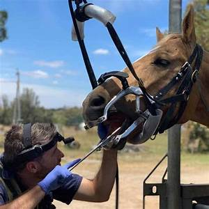 Looking For A Horse Dentist In Perth