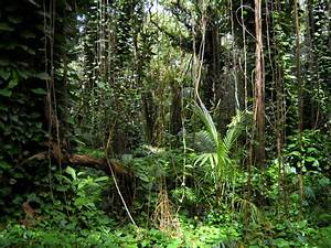 Best Photos of Rainforest Diorama Background - Diorama ...