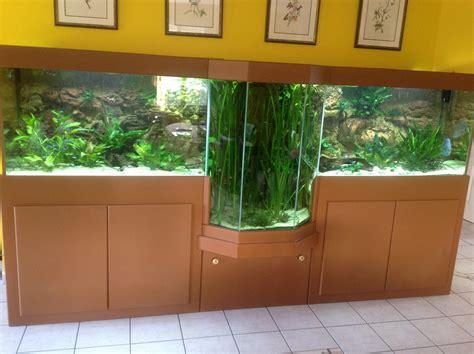 aquariophile du tarn et aquarium avec une forme originale dans salon