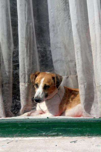 combien le chien dans la vitrine 171 du bleu dans mes nuages