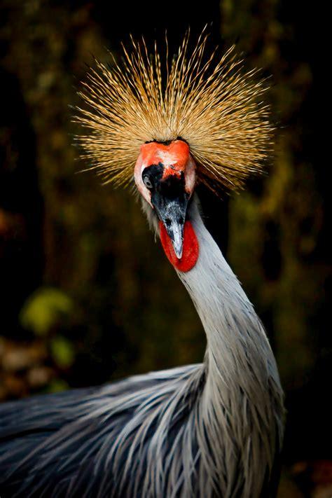 beautiful tropical birds auchter photography