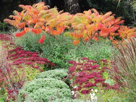 autumn garden plants 33 best images about garden sedum autumn joy aka herbstfreude on pinterest gardens autumn