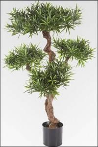 Pflanzen Günstig Kaufen : wir bieten ihnen eine gro e auswahl an k nstlichen pflanzen in unserem onlineshop zu g nstigen ~ A.2002-acura-tl-radio.info Haus und Dekorationen