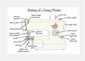 Anatomy  U0026 Classification Of Basic Sewing Machine