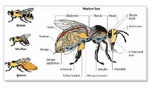 Insect Body Anatomy