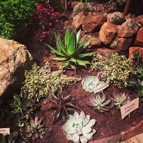 21 succulent garden designs garden designs design