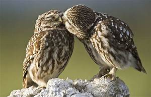 The Owl | Very Cute and Lovely Bird Photographs | Funny ...