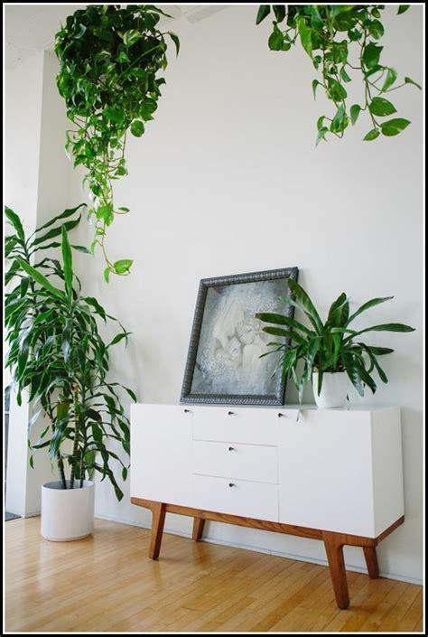 feng shui wohnzimmer pflanzen wohnzimmer house und