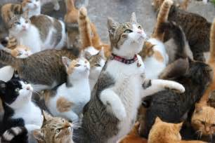 japanese cat japan s cat island asks for food gets more than