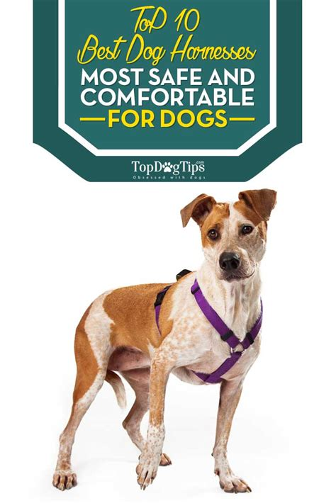 dog harness huge review   pet harnesses  dogs