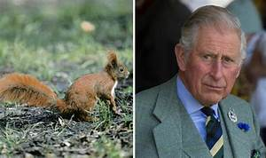 Prince Charles Talks to Squirrels and Gives Them NAMES ...