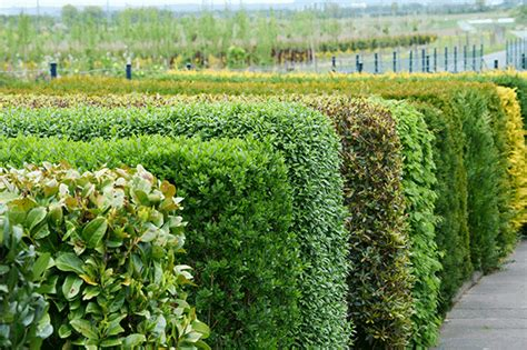 Grüner Rahmen Und Kulisse Für Den Garten