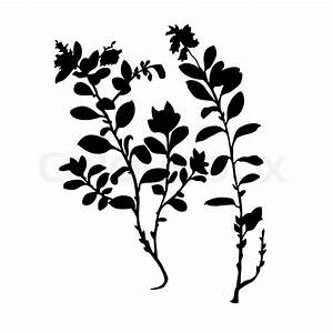 Vector silhouette of the plant of the cowberry on white
