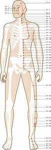 Stomach Meridian Acupuncture Points  With Images