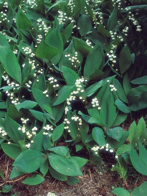 plants for shady areas 1000 ideas about plants for shady areas on pinterest shade annuals annual plants and