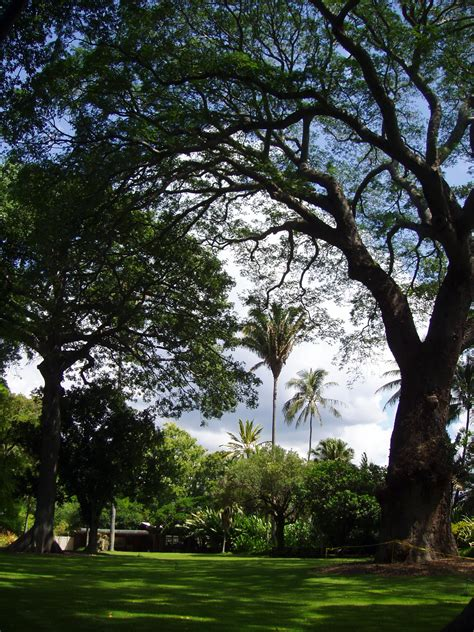 botanical gardens oahu foster botanical garden