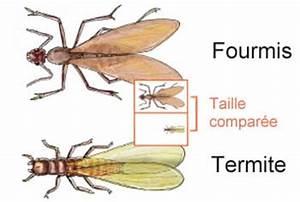 Produit Contre Les Termites : comment lutter contre les termites au quebec ~ Melissatoandfro.com Idées de Décoration