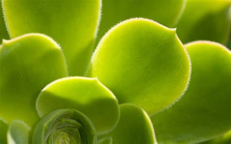 Very Green Leaves Wallpaper - Green Wallpaper (19784869 ...