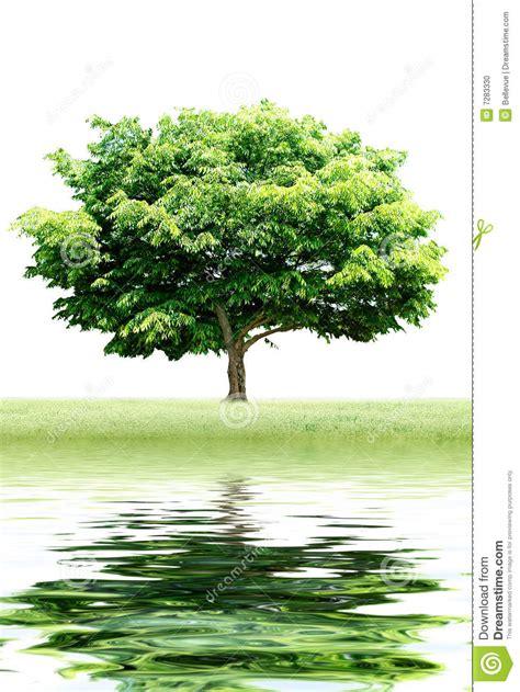 Tree Reflection Stock Photo Image Of Peace Blue