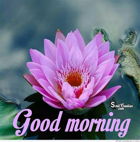 Morning Images Morning Flowers Pictures And Graphics Smitcreation