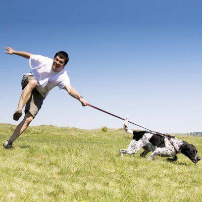 teach  dog  stop pulling   leash