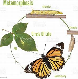 Butterfly Life Circle