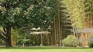 Paysager Son Jardin : jardin paysager conseils d 39 un paysagiste pour bien l 39 am nager c t maison ~ Dallasstarsshop.com Idées de Décoration