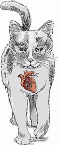 Heartworm Disease In Cats - Cat Owners