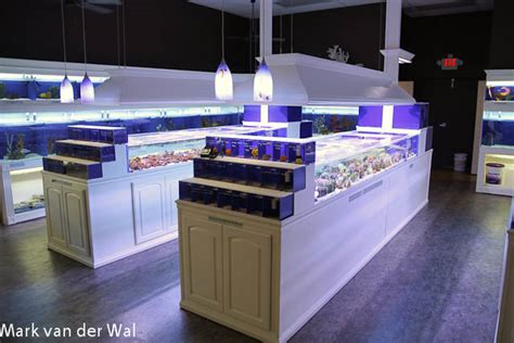 reef in alpharetta is a well executed aquarium store news reef builders the reef
