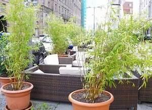 Winterharte Kübelpflanzen Als Sichtschutz : bambus als k belpflanze und sichtschutz ~ Michelbontemps.com Haus und Dekorationen