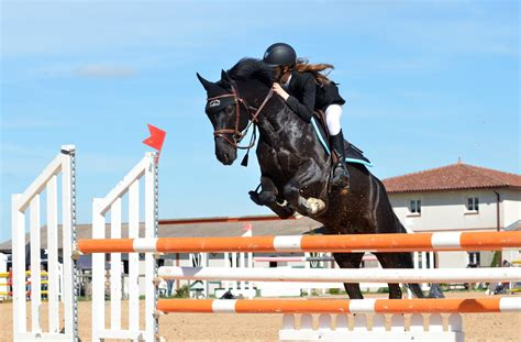 jumping horse riding english equestrian horseback sport person sports equitation obstacle eventing human stallion seat equestrianism action hunt recreation pentathlon