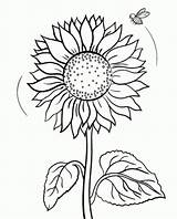 Sunflower Coloring 8kb 746px sketch template