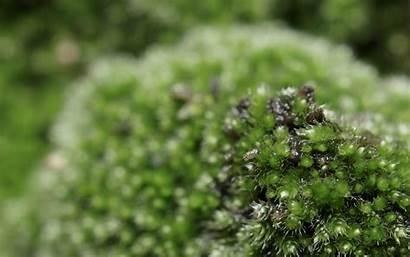 Moss Macro Nature Mobile Desktop Backgrounds
