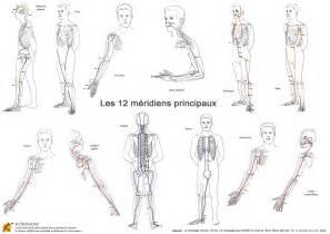 la circulation d 233 nergie dans le corps humain avec les m 233 ridiens principaux