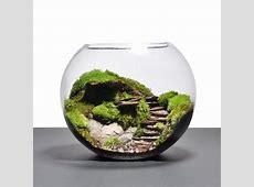 Best 25+ Terrarium ideas on Pinterest Diy terrarium