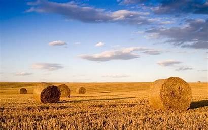 Field Wallpapers Wheat Landscape Pixelstalk Bale