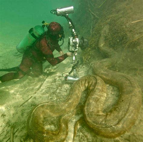 funny absurd giant snake anaconda