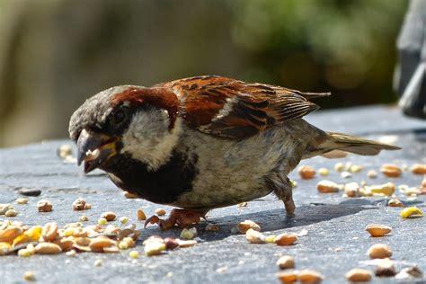 a kilchoan diary gutsy little birds