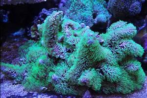 Ocean View Soft Corals