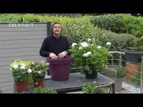 entretien lierre en pot g 233 ranium en pot plantation et entretien jardinerie truffaut tv