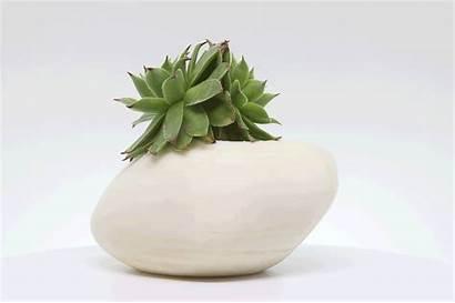 Pot Plant Behance Paint